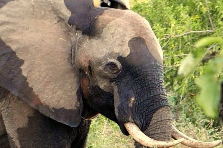 Doctors Treating This Wounded Elephant Found Something Amazing